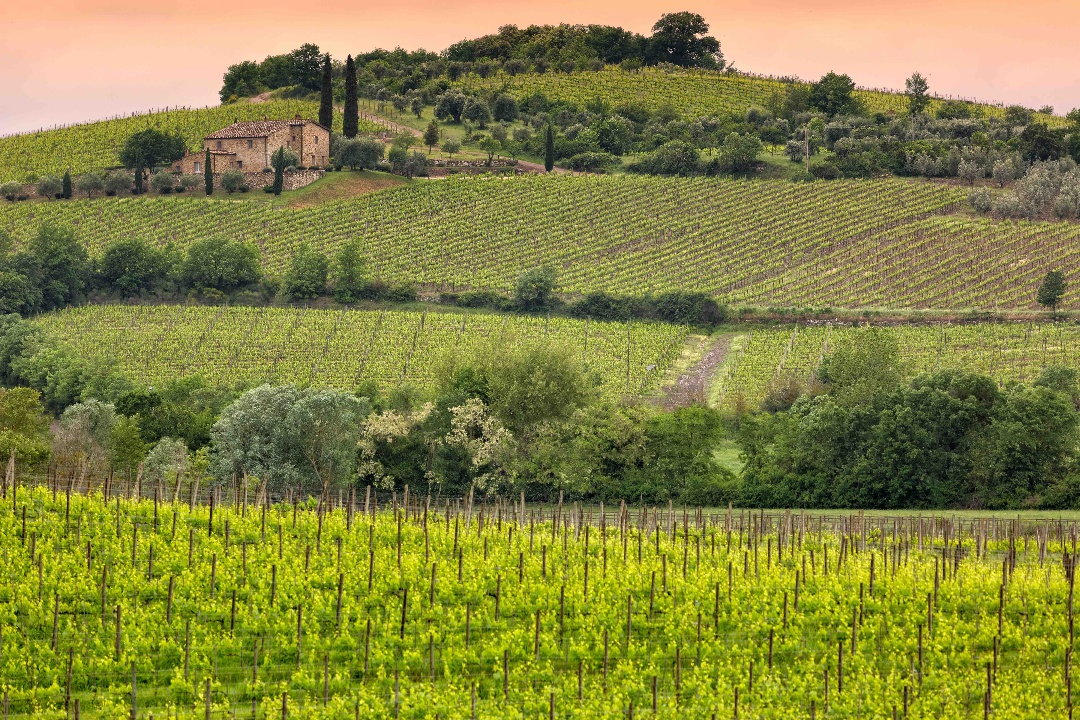 Brunello_Winery-1