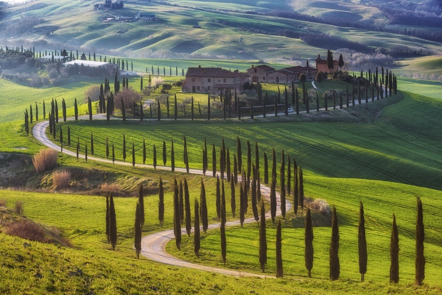 Tuscan_Cypresses_Road-1-1